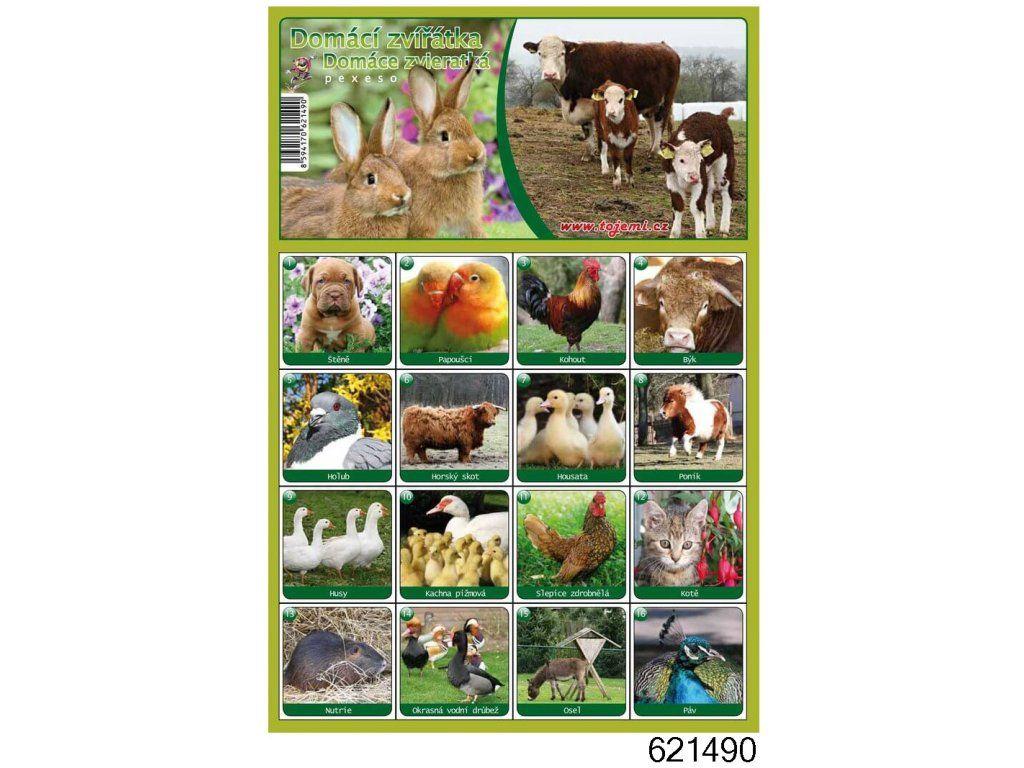 Pexeso - domácí zvířata